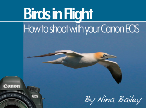 How to Shoot Birds in Flight by Nina Bailey (reprint)